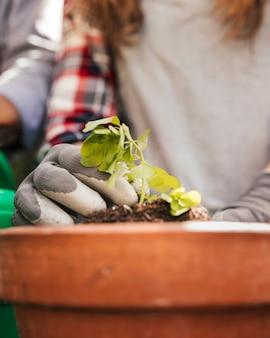 Nahaufnahme des weiblichen gärtners den sämling in der topfpflanze pflanzend