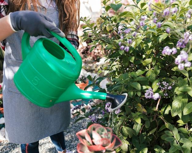 Nahaufnahme des weiblichen gärtners die anlagen mit gießkanne wässernd