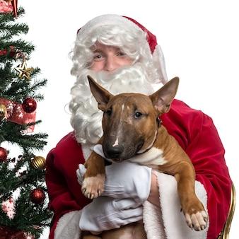 Nahaufnahme des weihnachtsmanns, der einen bullterrier lokalisiert auf weiß hält