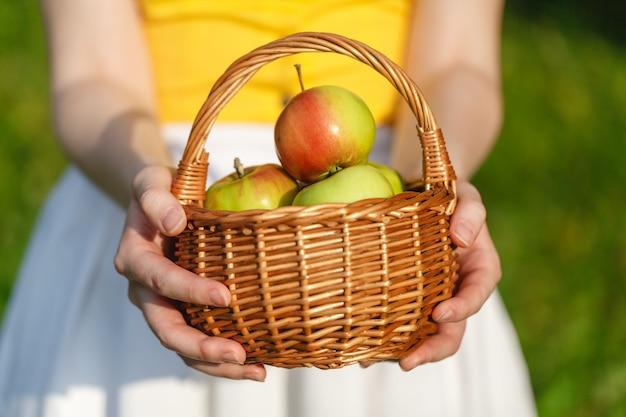 Nahaufnahme des weinlesekorbs mit organischen äpfeln in den händen der frau. gartenernte. sommer. draußen. frau, die einen großen korb der frucht hält. gesunder lebensstil und essen.