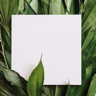 Nahaufnahme des weißen leeren papiers über den grünblattzweigen