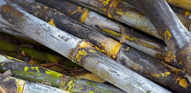 Nahaufnahme des zuckerrohrsatzes