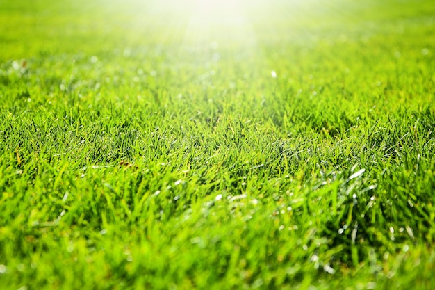Nahaufnahme detail einer grünen wiese, die von einem schönen weichen licht beleuchtet wird. sonnenlicht. attrappe, lehrmodell, simulation. kopieren sie platz für text. grüne grasbeschaffenheit, grüner hintergrund vom fußballplatz im freienpark. golfplatz