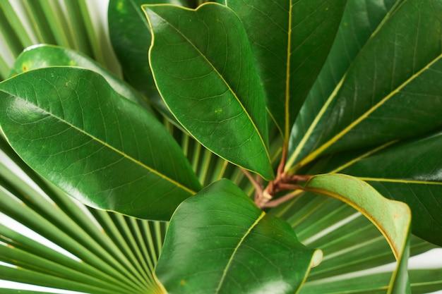 Nahaufnahme detail grünes magnolienblatt muster und textur, pflanzen hintergrund
