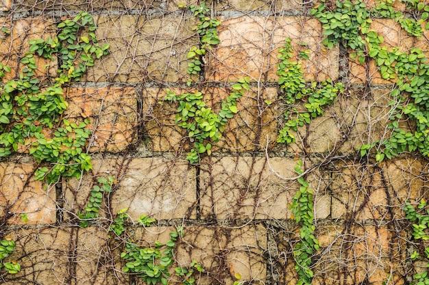 Nahaufnahme die grünpflanze auf der wand für strukturierten hintergrund