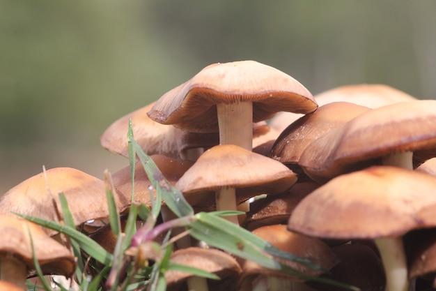 Nahaufnahme einer ansammlung von pilzen der wiese