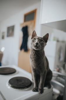 Nahaufnahme einer entzückenden grauen katze mit langen schnurrhaaren, die auf einem herd sitzt