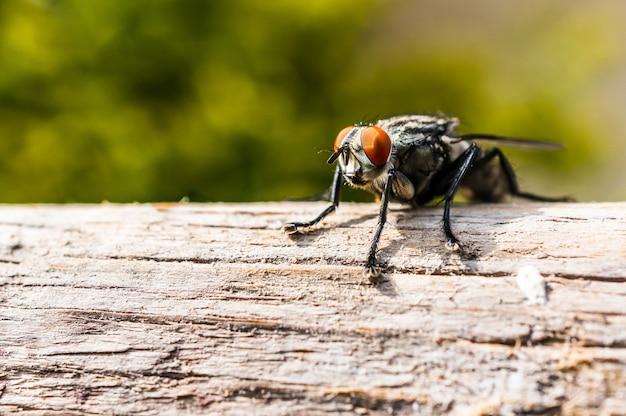 Nahaufnahme einer fliege mit orangefarbenen augen und verschwommenen beinen, die auf einem ast sitzt