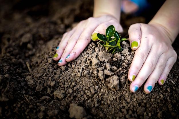 Nahaufnahme einer frau, die mit beiden händen setzlinge pflanzt, bäume pflanzt, bäume pflanzt, um die globale erwärmung zu reduzieren, ideen zum pflanzen von bäumen. globale erwärmung.