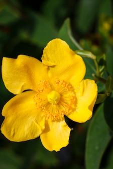 Nahaufnahme einer gelben blüte