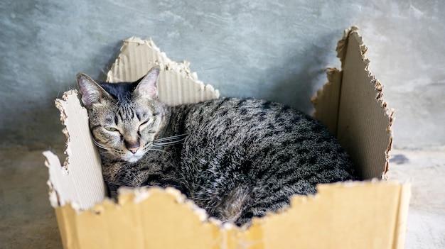 Nahaufnahme einer grauen gestreiften katze, die in einem kasten liegt.