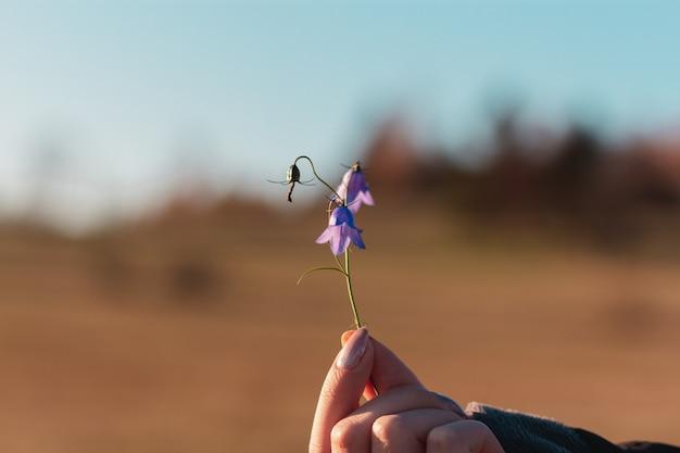 Nahaufnahme einer hand, die glockenblumen unter dem sonnenlicht hält