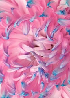 Nahaufnahme einer hübschen rosa und blauen blume