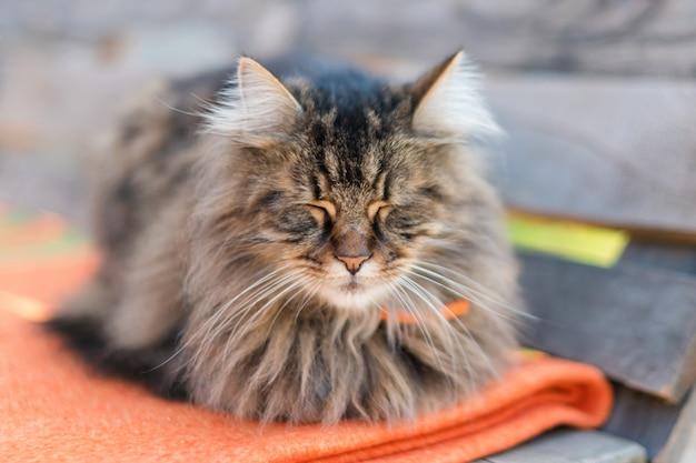 Nahaufnahme einer katze, die auf bank mit unschärfe sitzt. ruhige katze, die im sommer draußen sitzt und schläft.