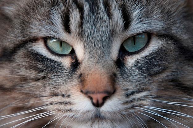 Nahaufnahme einer katze