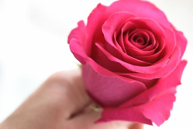 Nahaufnahme einer männlichen hand, die eine rosa rosenblume hält