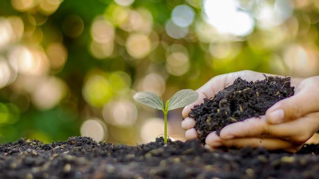 Nahaufnahme einer menschlichen hand, die einen sämling hält, der sämlinge pflanzt