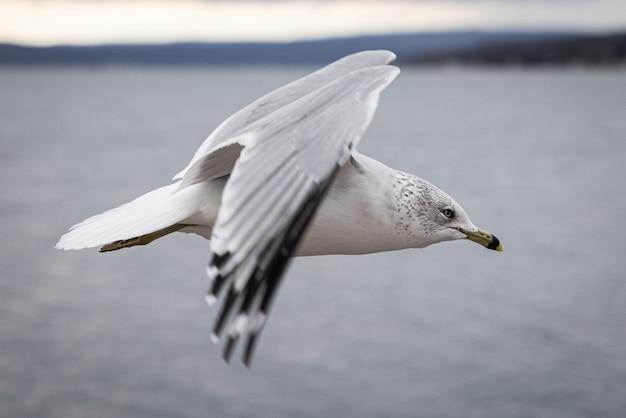 Nahaufnahme einer möwe, die mit einem verschwommenen hintergrund über dem meer fliegt