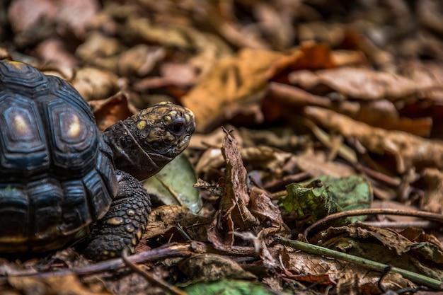 Nahaufnahme einer niedlichen schildkröte