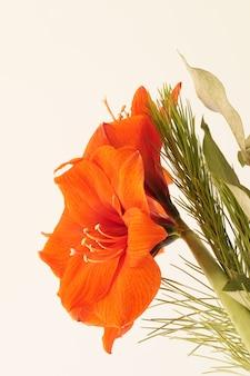 Nahaufnahme einer orange amaryllis, umgeben von grün unter lichtern