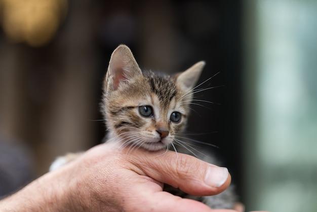 Nahaufnahme einer person, die ein entzückendes kleines kätzchen hält
