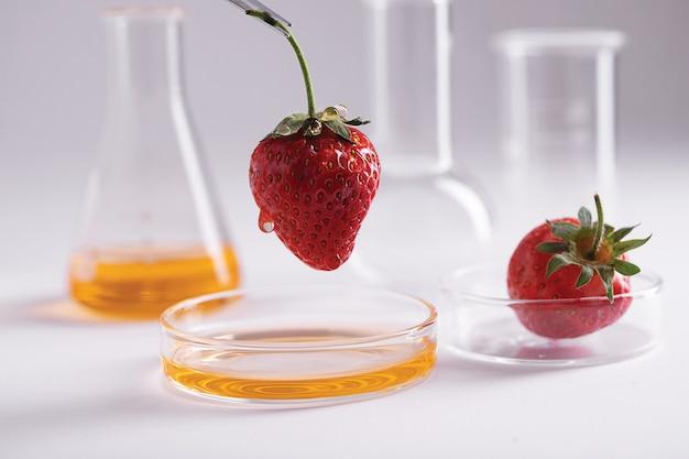 Nahaufnahme einer pinzette, die eine erdbeere über einem teller mit gelber flüssigkeit in einem labor hält