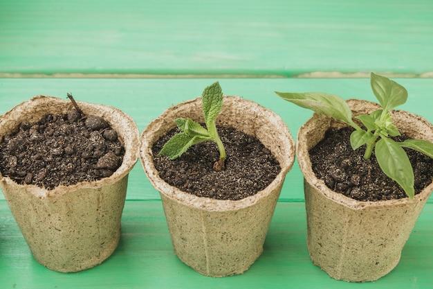 Nahaufnahme einer saftigen pflanzensammlung auf holztisch