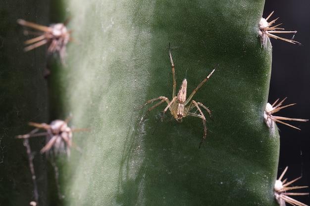 Nahaufnahme einer spinne mit einem spinnennetz auf dem kaktus.
