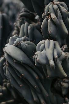 Nahaufnahme einer stacheligen seltenen kaktuspflanze in einer wüste