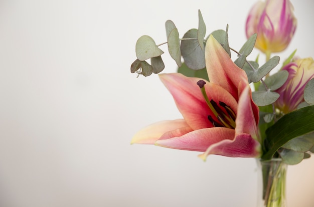 Nahaufnahme einer vase mit lilie; eukalyptus populusblätter und -tulpe gegen weißen hintergrund