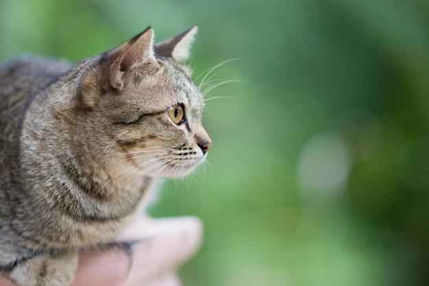 Nahaufnahme einer wachen katze