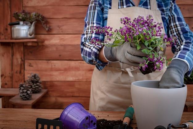 Nahaufnahme eines älteren menschen mit schürze und schutzhandschuhen bei der gartenarbeit und dem pflanzen neuer violetter blumen. rustikaler holzhintergrund und tisch