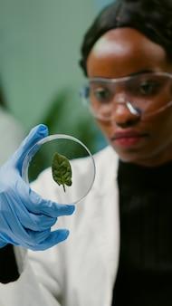 Nahaufnahme eines afrikanischen wissenschaftlers, der petrischale mit grünem blatt betrachtet