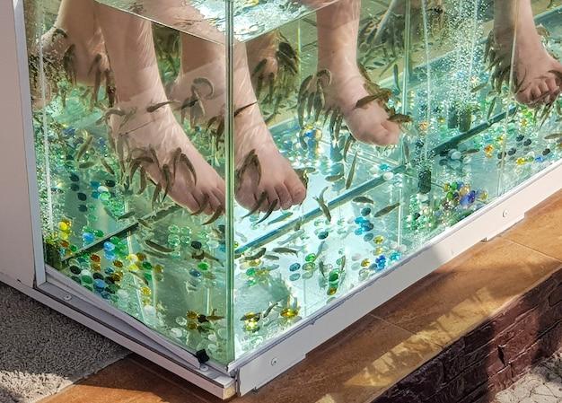 Nahaufnahme eines aquariums mit peeling der haut der füße von tropischen fischen im wasser.