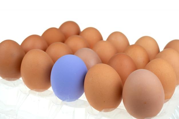 Nahaufnahme eines blauen osterei-huhns, umgeben von frischen eiern der natur