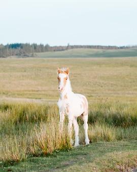 Nahaufnahme eines entzückenden ponys, das die wildnis genießt