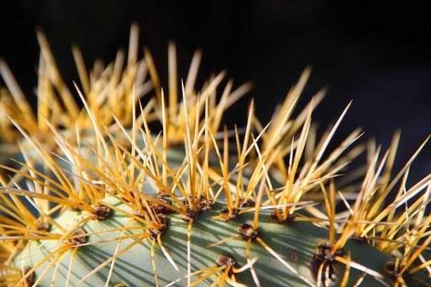 Nahaufnahme eines erstaunlichen exotischen pflanzenblattes mit scharfen dornen