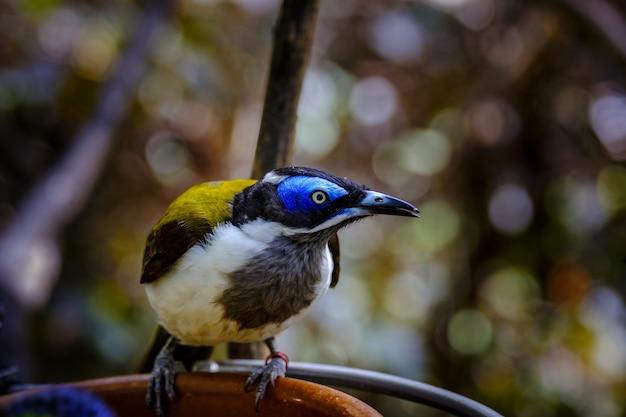 Nahaufnahme eines exotischen vogels auf unschärfe