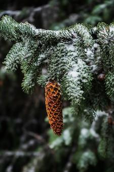 Nahaufnahme eines fichtenkegels, der von einem schneebedeckten zweig hängt