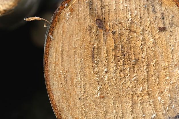 Nahaufnahme eines geschnittenen baumstammes zeigt die textur des holzes
