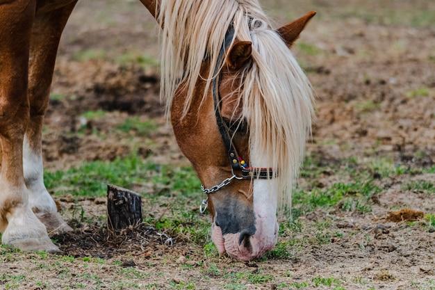 Nahaufnahme eines grasenden pferdes auf dem feld an einer farm