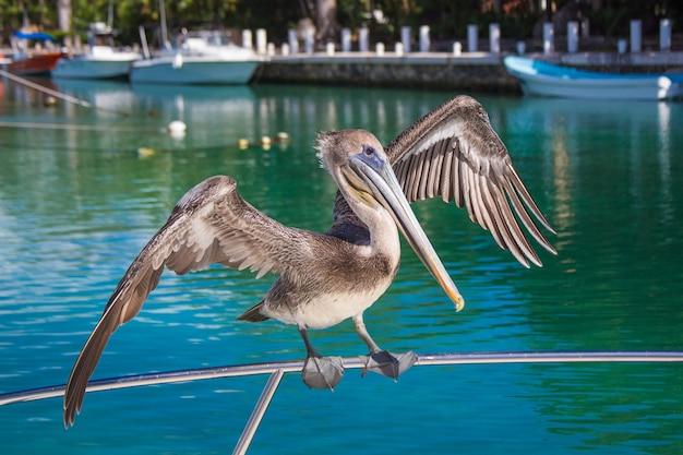 Nahaufnahme eines grauen pelikans, der auf einem schiff sitzt