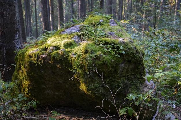 Nahaufnahme eines großen steins im wald, der durch moos bedeckt wird