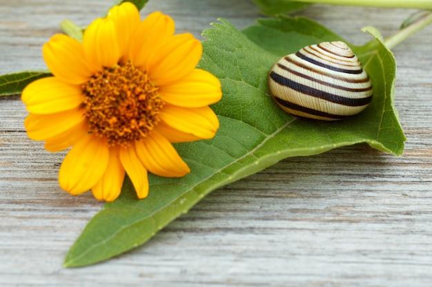 Nahaufnahme eines grünen blattes mit einer gelben blume und einer schnecke auf dem holzbrett. geringe schärfentiefe. konzentriere dich auf die schnecke.