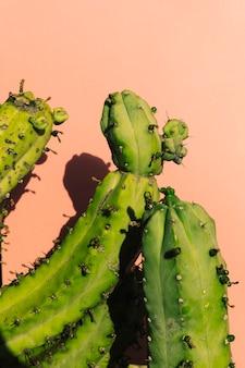 Nahaufnahme eines grünen kaktus
