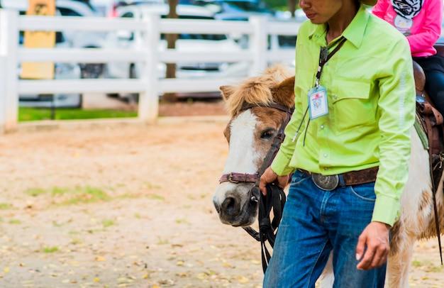Nahaufnahme eines hausmeisters zu fuß entlang der nase eines pferdes im stall.