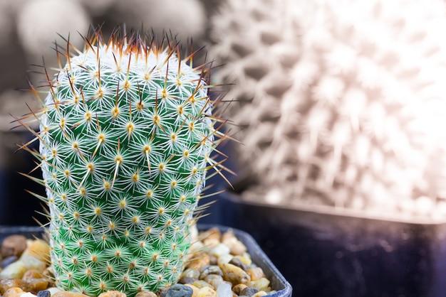 Nahaufnahme eines hellgrünen kaktus