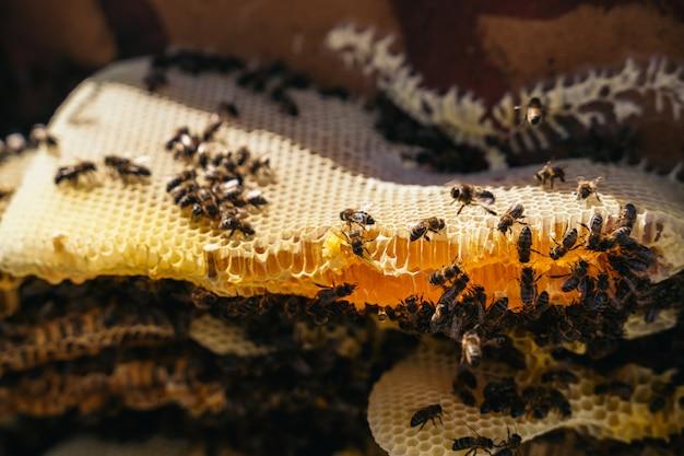 Nahaufnahme eines imkers, der eine bienenwabe voller bienen hält
