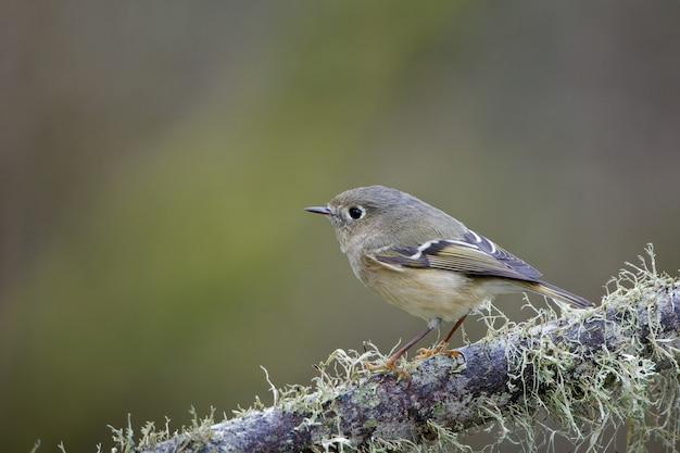Nahaufnahme eines kleinen vogels auf einem ast