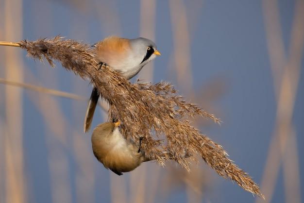 Nahaufnahme eines kleinen vogels auf einem bratzweig mit verschwommenem blauem himmel